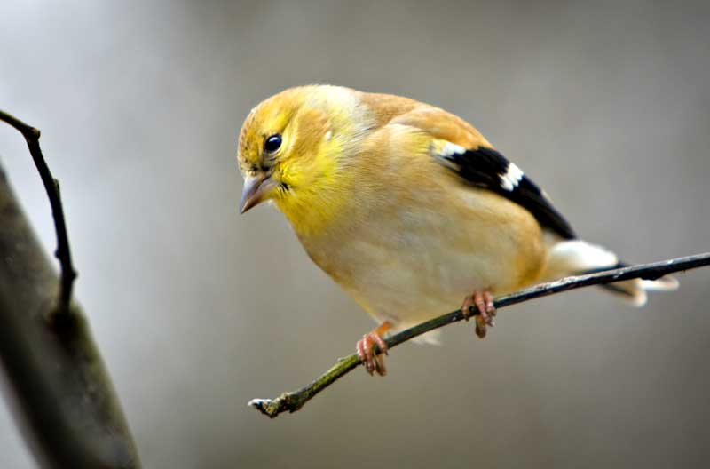 bird meaning finch meaning
