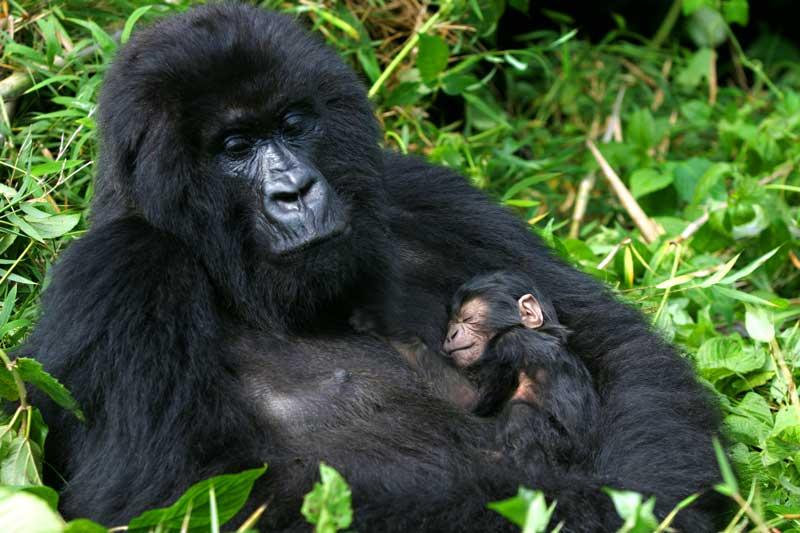 symbolic gorilla meaning