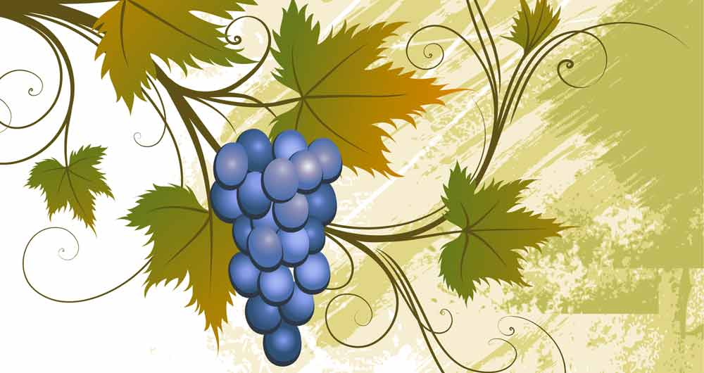 grapevine meaning and grapevine tattoo ideas