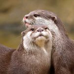 symbolic otter meaning