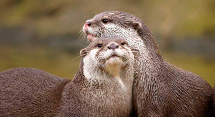 symbolic otter meaning