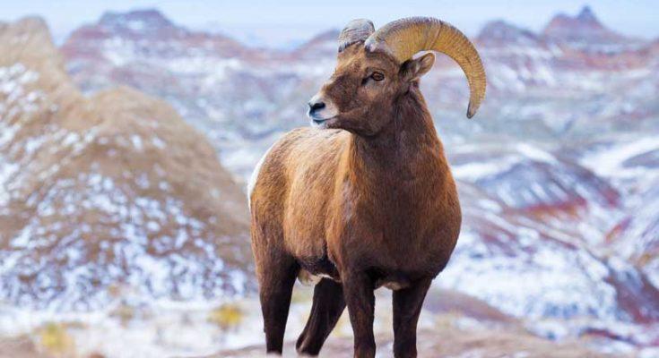 symbolic ram meaning