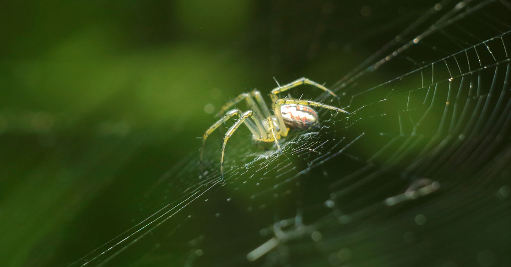 spider meaning and law of attraction