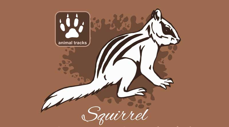 squirrel meaning squirrel track identification