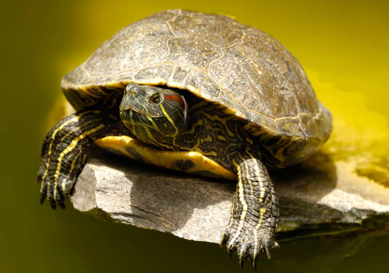 symbolic turtle meaning