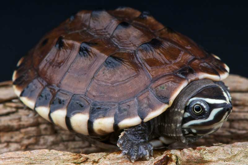 symbolic turtle meanings
