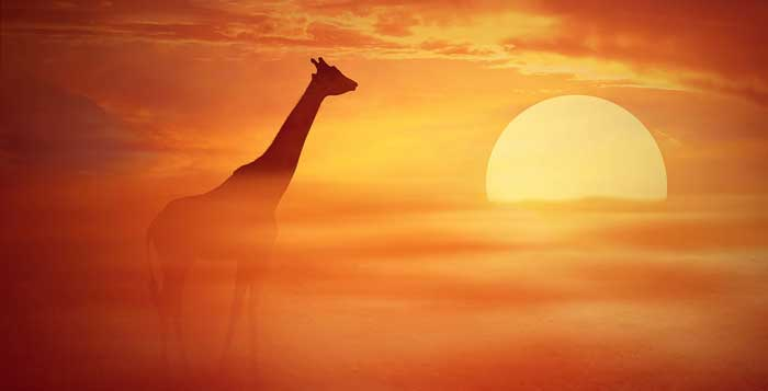 solar animal totem solar animal meaning