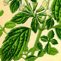Aromatherapy oil meanings lemon balm meaning