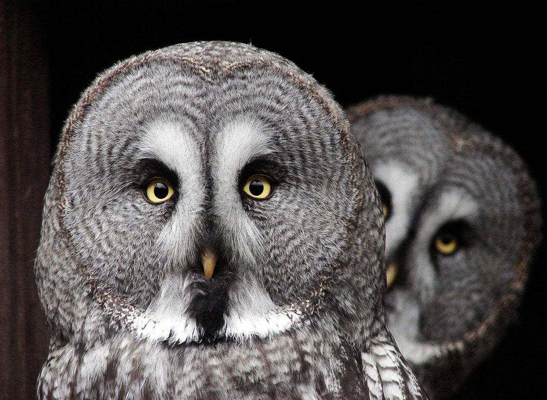 Owl meaning owl death meaning