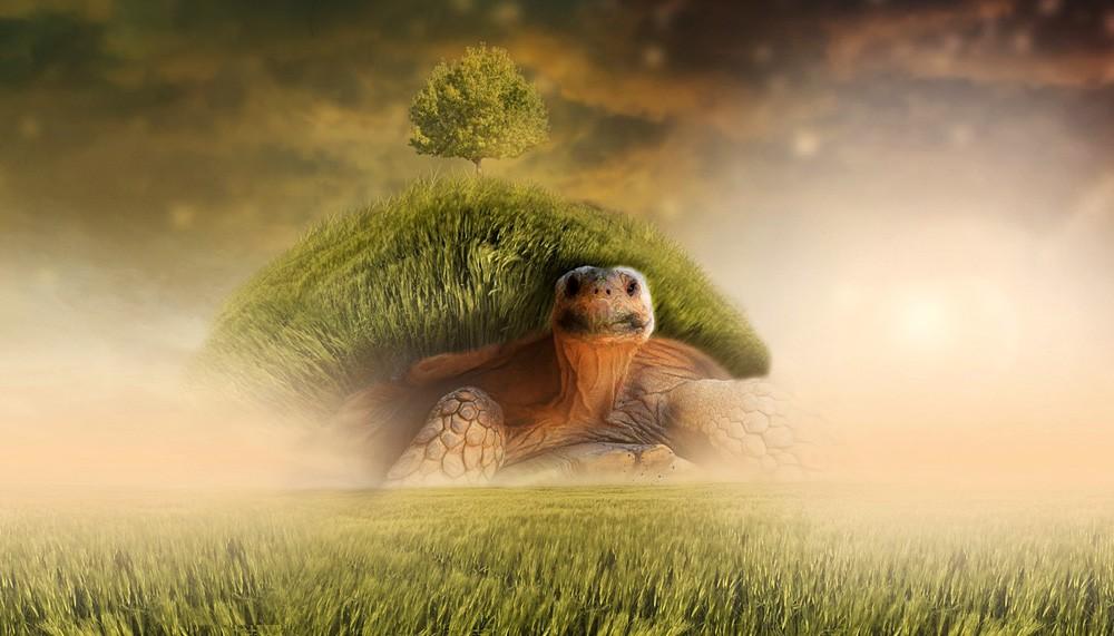 Turtle Myth, World Turtle, Turtle Meaning
