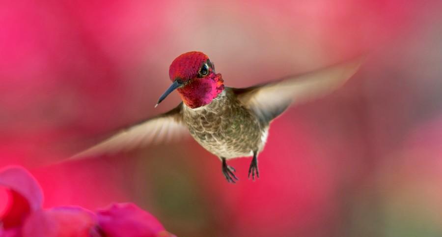 Humdinger Hummingbird Totem Messages