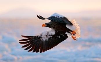 symbolic bird meaning