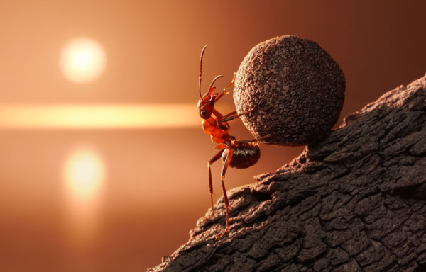 Symbolic Meaning of Ants