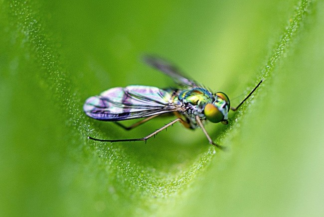 symbolic fly meaning