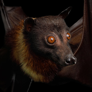Chthonic-Meaning-Bat