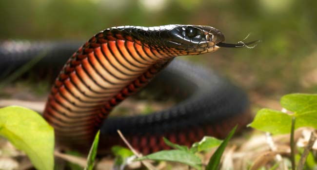 Snake Meaning
