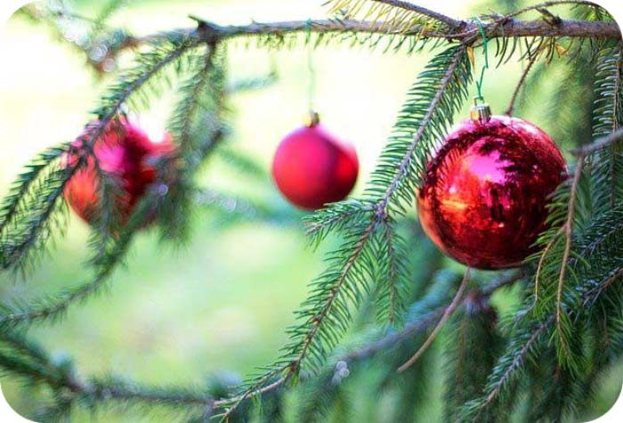 Holiday Meaning Of Trees