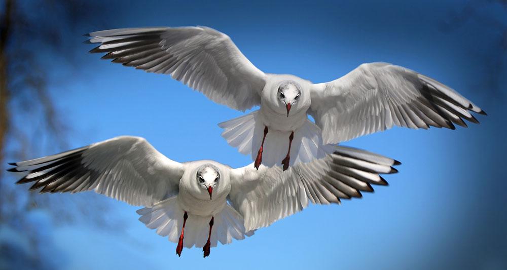Bird omens and bird messages