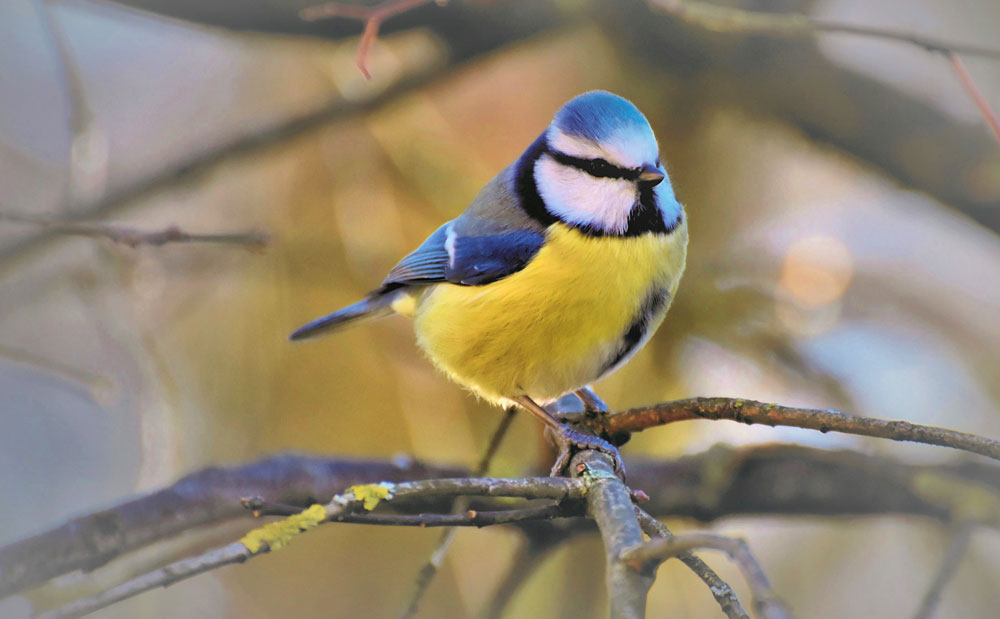 Bird omens and bird meanings