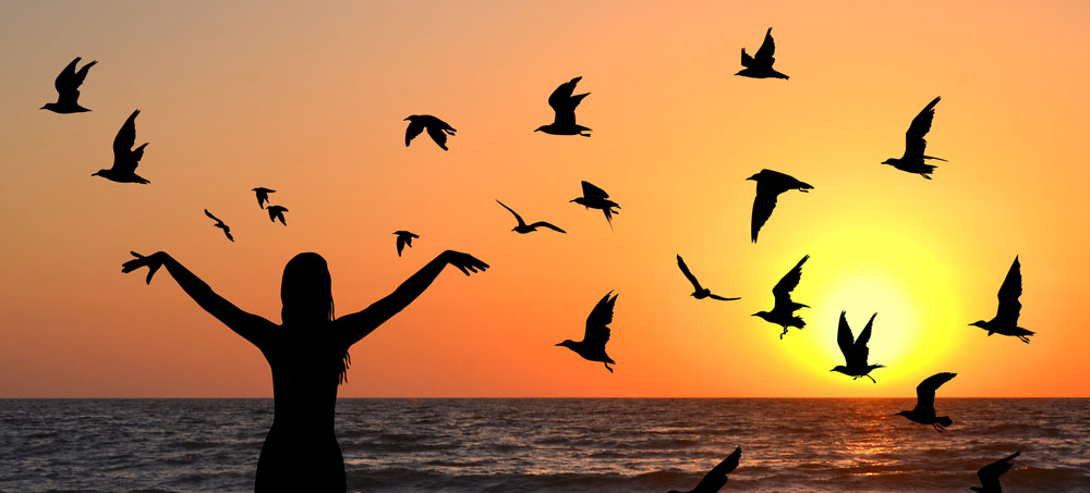 Bird Omens, Bird Messages and Meanings Oh My!