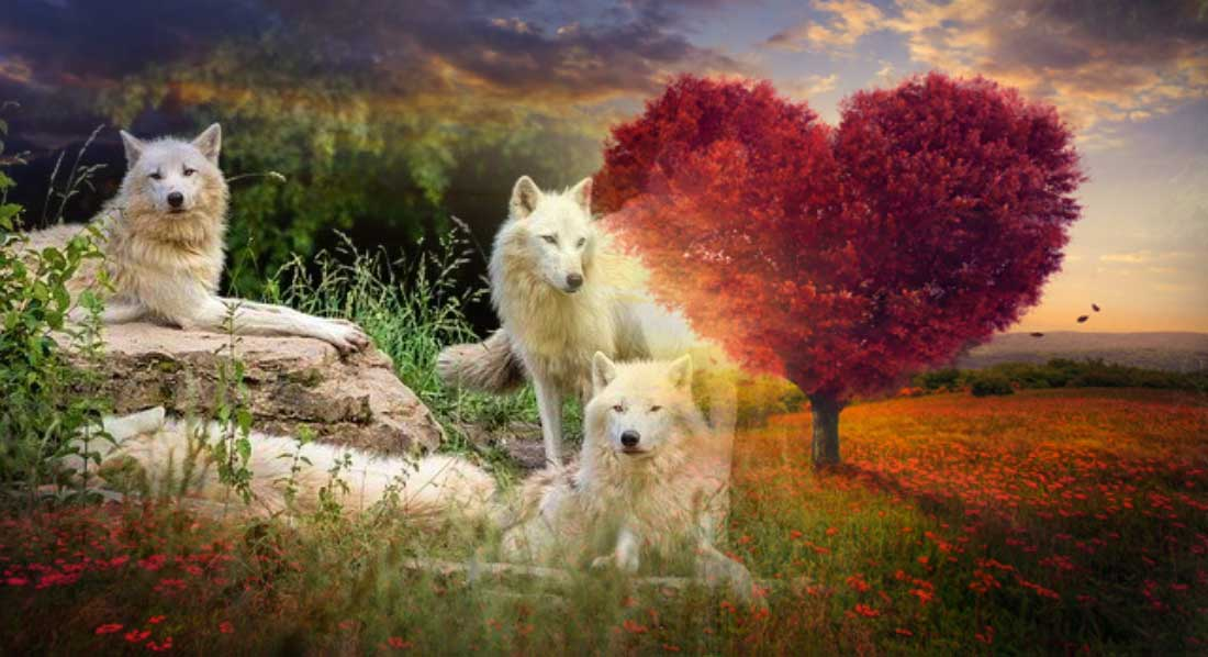 Meaning of Valentine's Day and its Connection with Wolves
