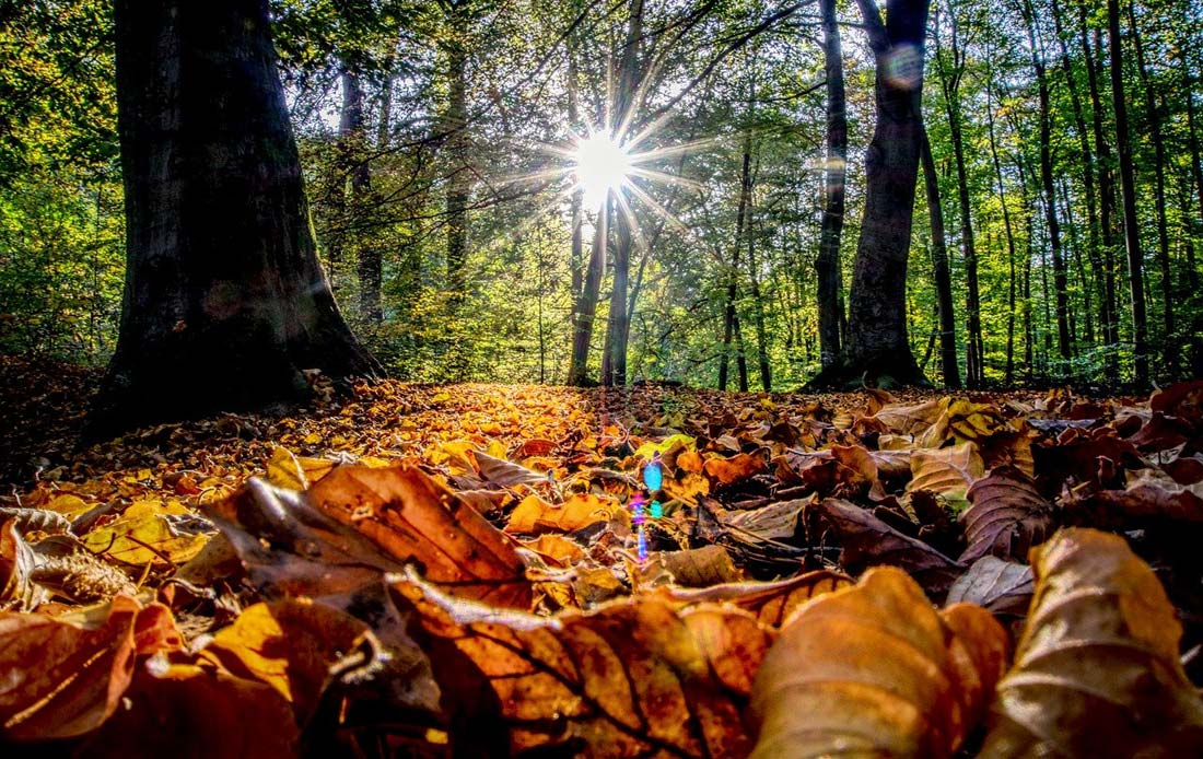 Autumn Zodiac Signs, Astrology and the Seasons