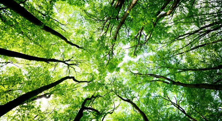 Meaning of Arbor Day and Ways to Celebrate Trees