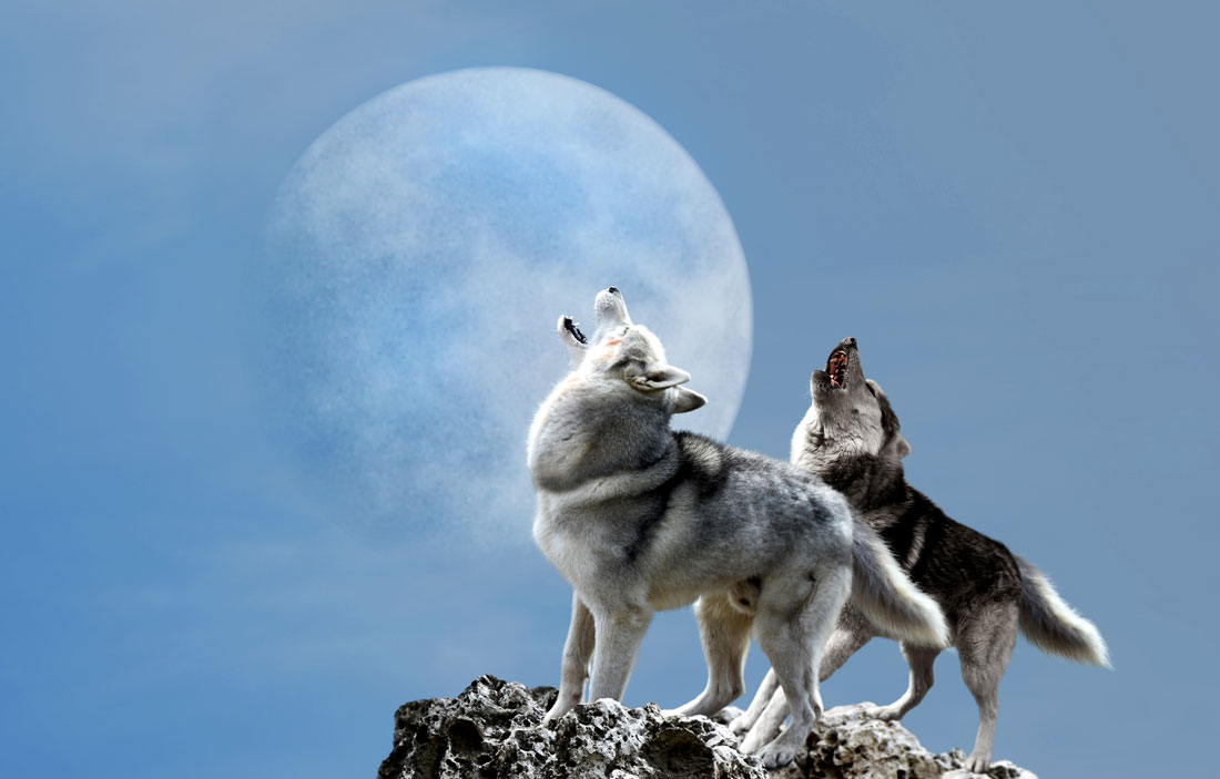 January Full Wolf Moon Meaning