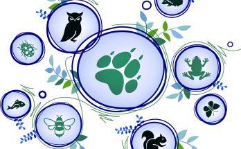 Identifying Animal Totems