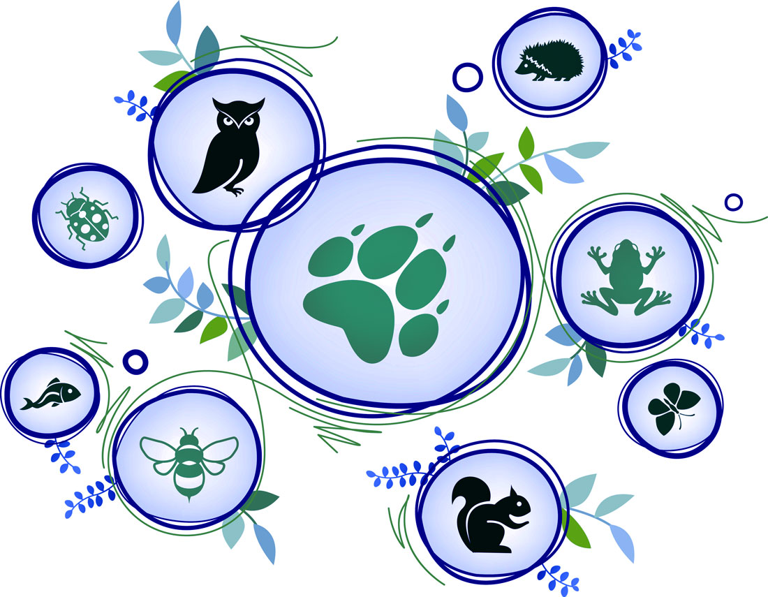 Intro to Identifying Animal Totems