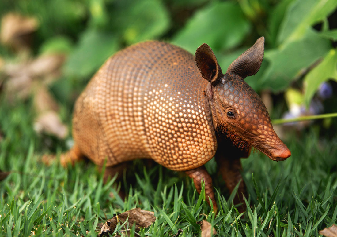 Armadillo Messages
