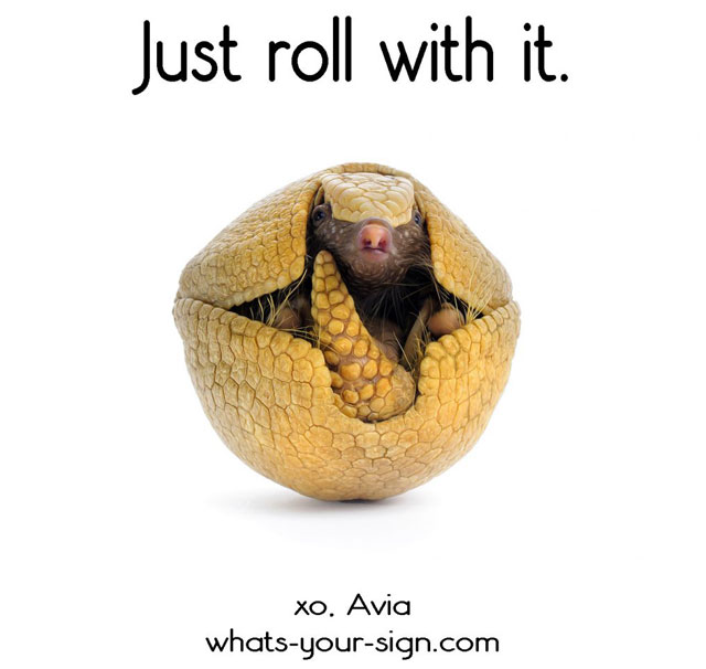 Armadillo Messages and Meaning