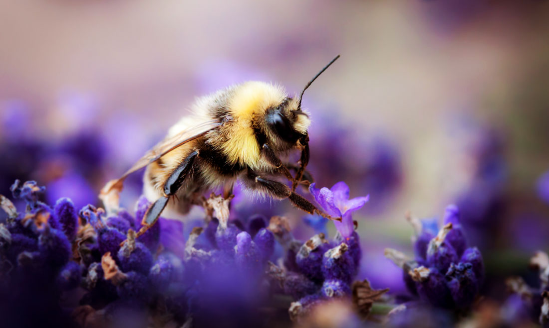 Bee Messages and Meanings