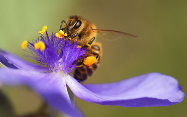 Symbolic Bee Messages