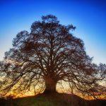 Celebrate Trees Arbor Day Tree Day