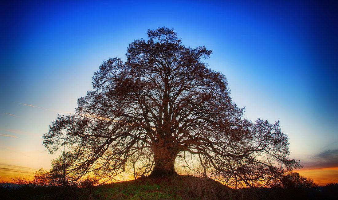 Ways to Celebrate Trees: Arbor Day, Tree Day, Any Day