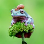 Frogs and Signs of Change