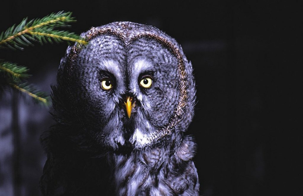 Owl Omens and Meaning