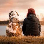 Shamanic Healing for Pets