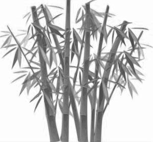 Nature's Symbols for Survivor - Bamboo