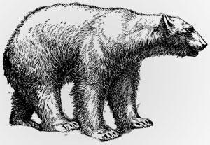 Nature's Symbols for Survivor - Polar Bear