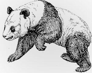 Nature's Symbols for Survivor - Pandar
