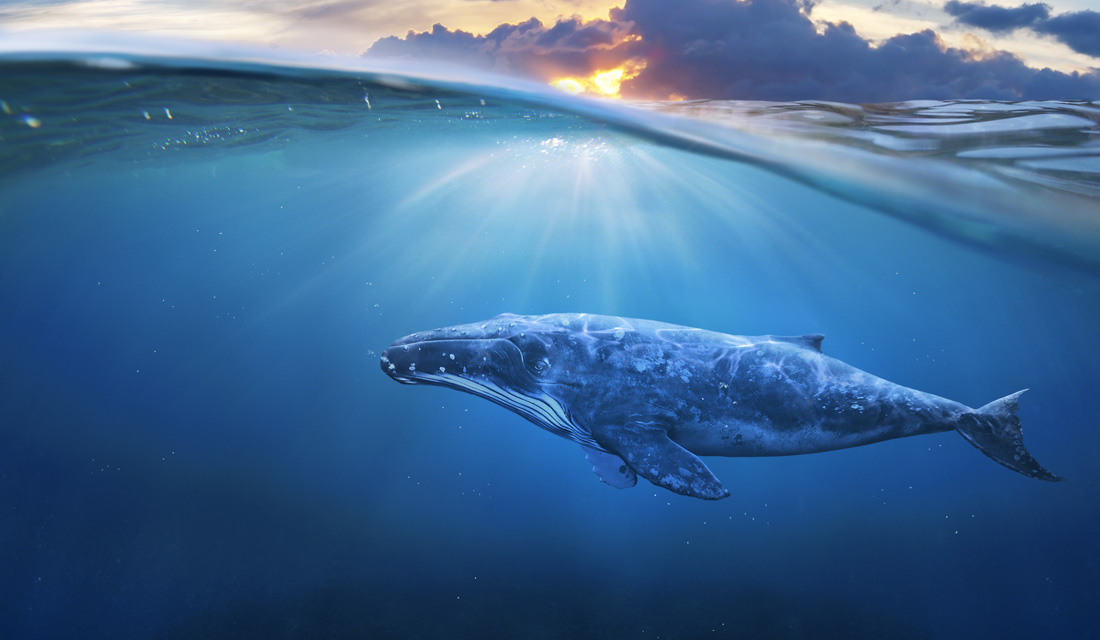 Autobiography of a Whale and Whale Messages