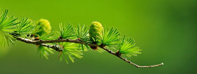 Ways to Celebrate Nature