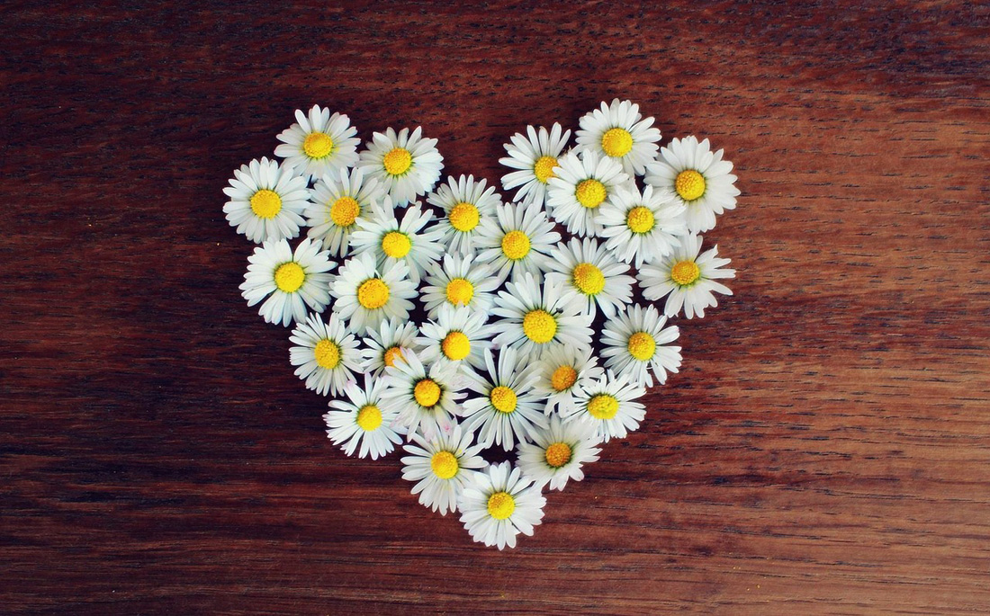 Daisy and Love Meanings