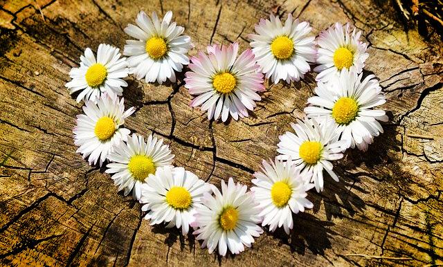 Daisy Love Meanings