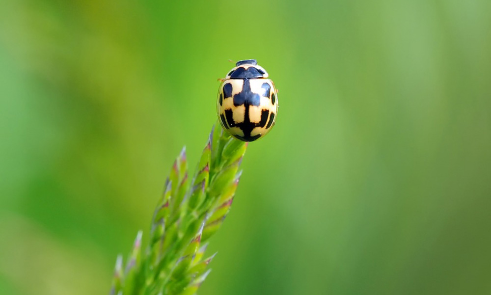 Lucky Bugs: Insects Symbolic of Luck