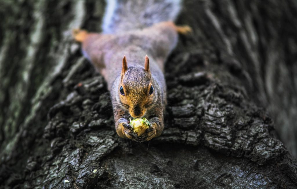 Squirrel Lessons About Perfectionism