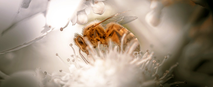 Bee Meaning and Love Lessons