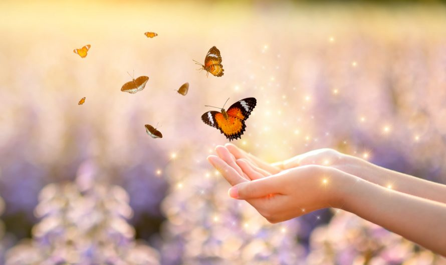 Butterfly Love Messages